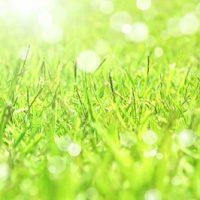 芝生の風景画
