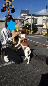 世田谷区のコイケル、子犬の社会化