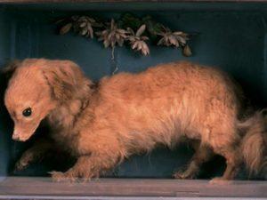 ターンスピット犬 イギリス