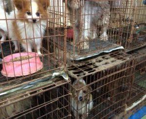 犬猫引き取り屋 パピヨン