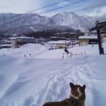 蔵王ゲレンデ 雪山トレッキング ウエルッシュコーギーペンブローク
