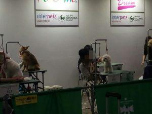 トイプードル 柴犬 トリミング