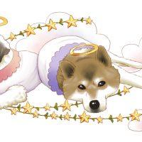 柴犬 シーズー 天使