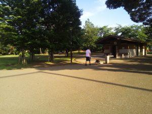 井の頭公園 犬の散歩 柴犬