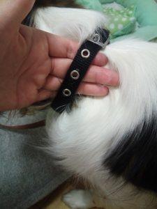 犬の首輪 カラー