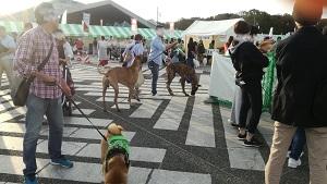 駒沢公園わんわんカーニバル グレートデン