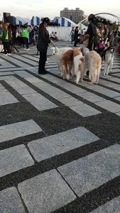 駒沢公園わんわんカーニバル ボルゾイ