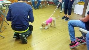 世田谷区ノーズワークセミナー ミックス犬 北欧